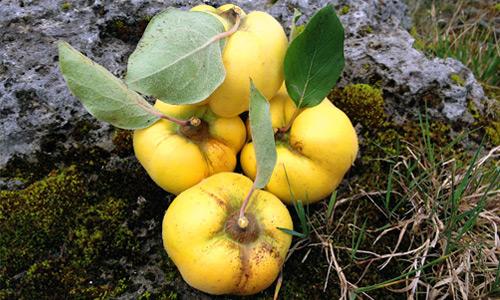 Prämierte Spirituosen aus sorgfältig ausgewählten Früchten