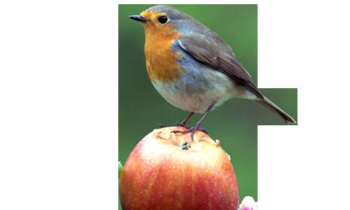 Hilfe für heimische Singvögel