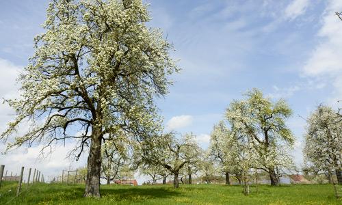 Obst von naturbelassenen Streuobstwiesen