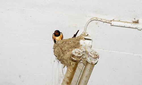 Nistplätze für Vögel