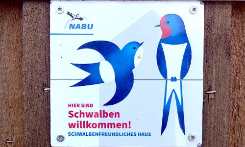 Brennerei Feller setzt sich für Tierschutz ein: Schwalben willkommen!